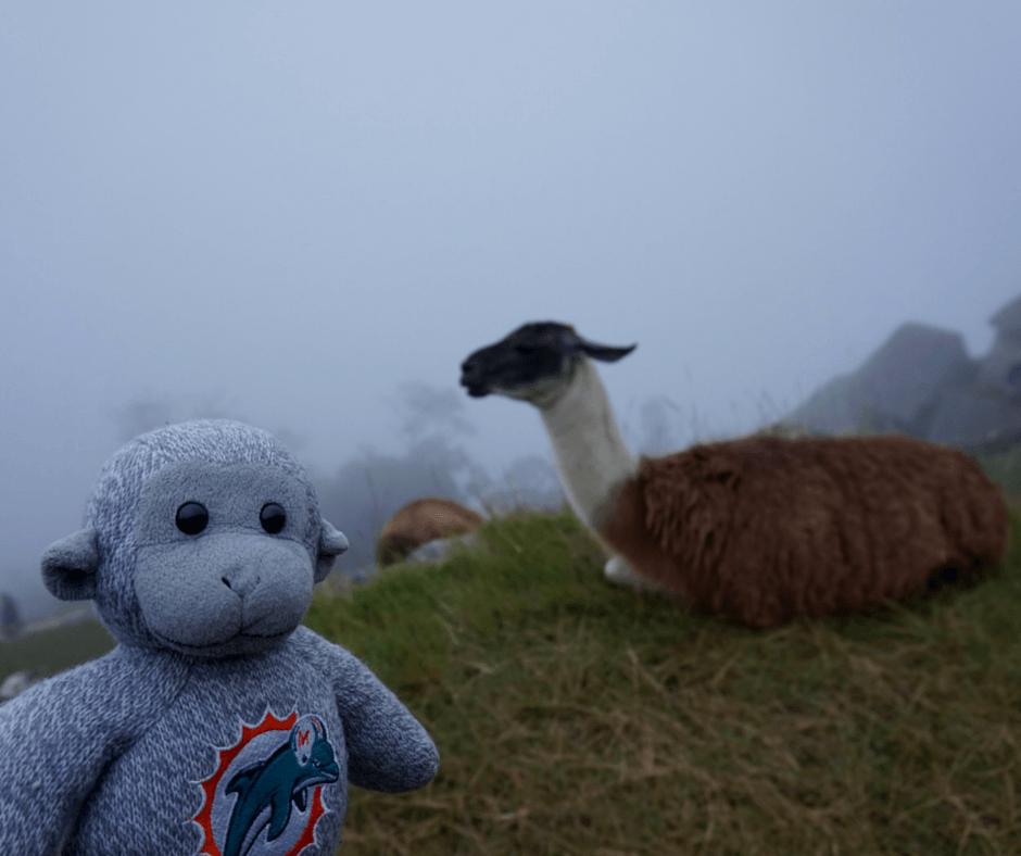 Llamas of Machu Picchu