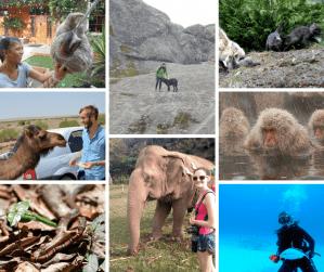 Buddy The Traveling Monkey Memorable Animal Encounters