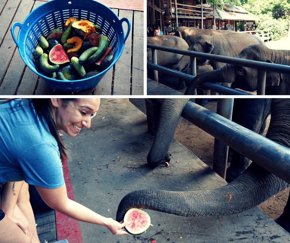 Feeding elephants at Elephant Nature Park
