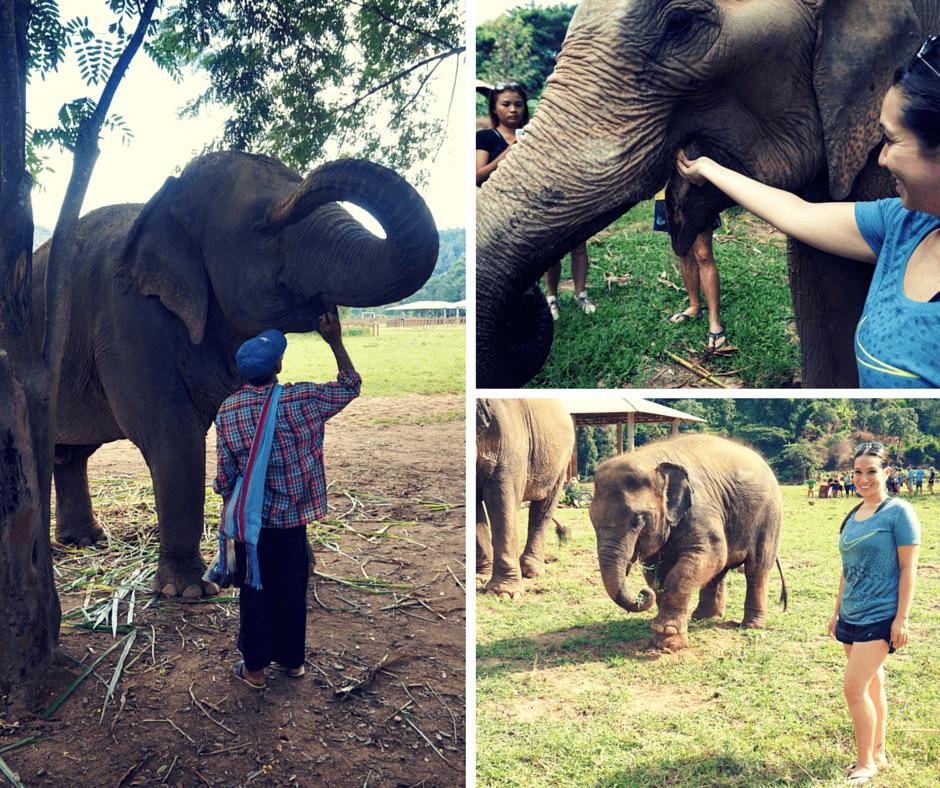 An elephant wit its trainer, feeding an elephant, and a baby elephant