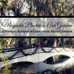 Magnolia Plantation And Gardens: A Tranquil Retreat in Charleston, South Carolina