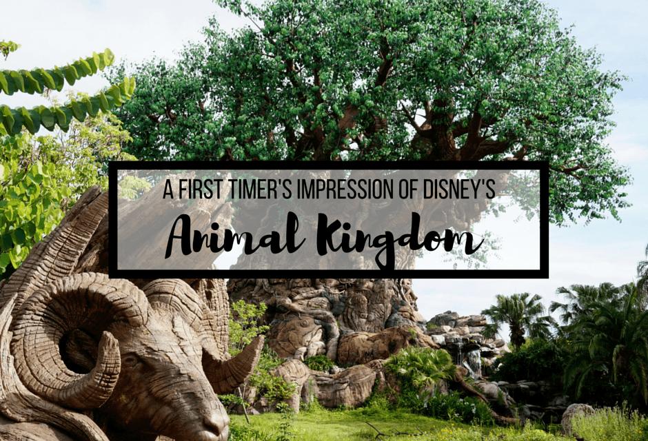 A First Timer's Impression Of Disney's Animal Kingdom