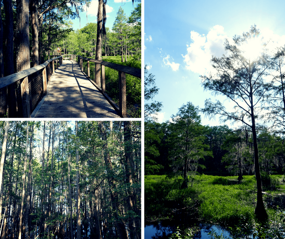 Nature Trails and Native Wildlife Tallahassee Museum