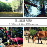 Tallahassee Museum: A Different Kind Of Museum