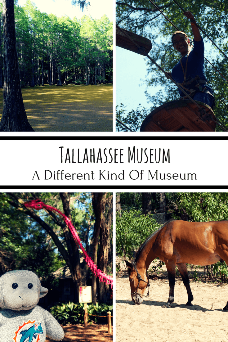 Florida's Tallahassee Museum is a different kind of museum! Visitors can zipline and learn about Northern Florida's natural environment.