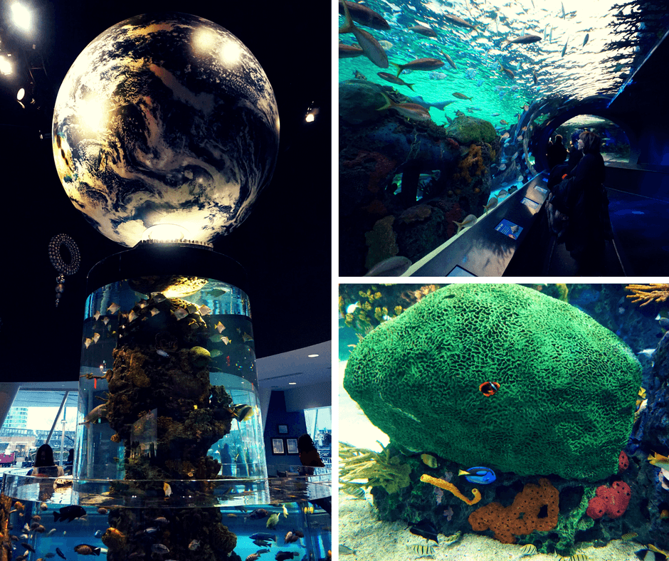 Inside the Ripley's Aquarium in Toronto
