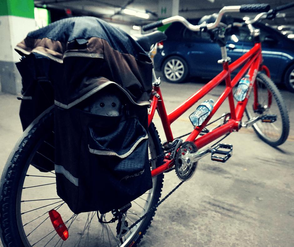 Buddy in the tandem bike bag