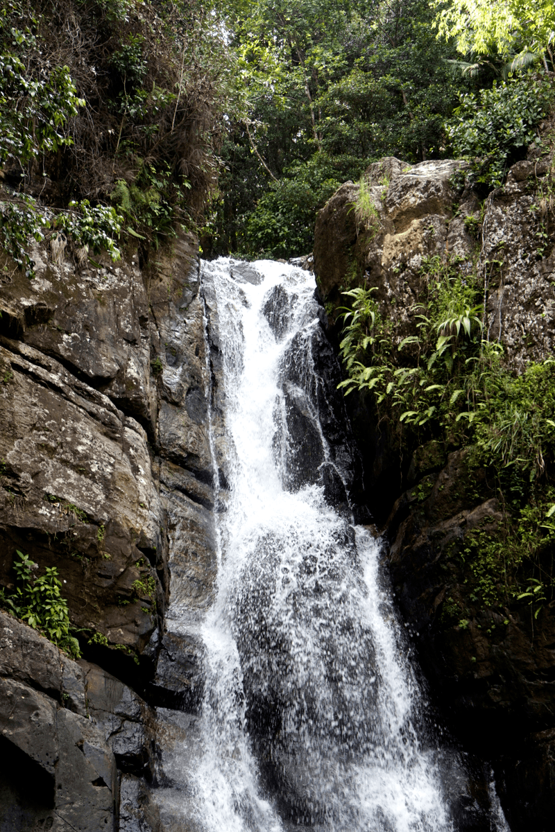 La Mina waterfall in el yunque