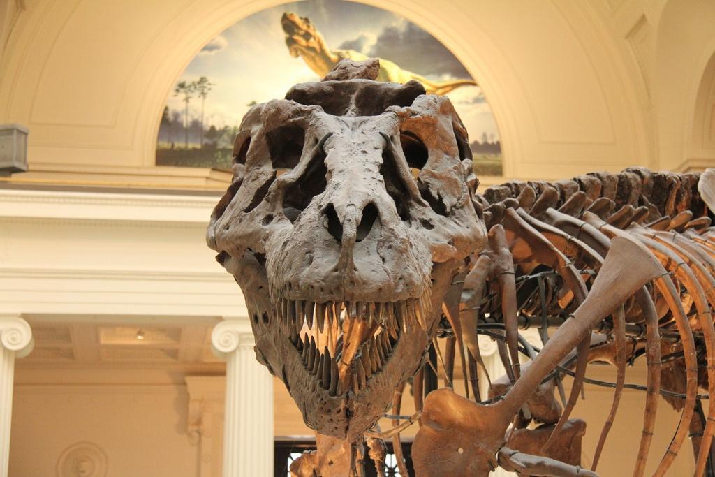 Sue the Tyrannosaurus Rex in Chicago