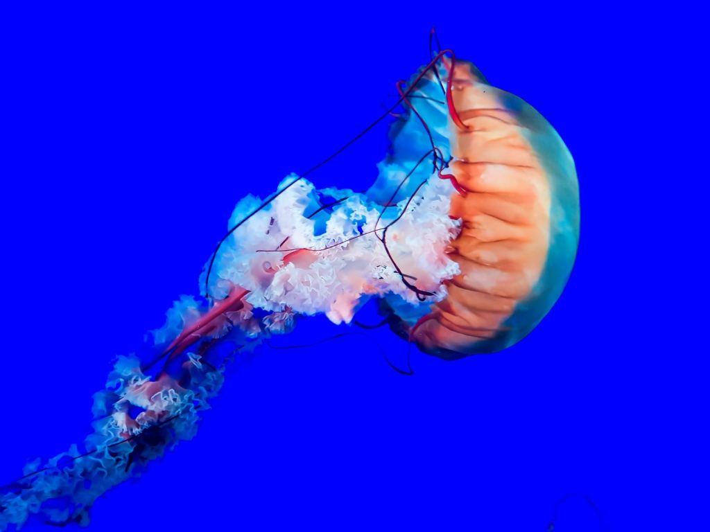 Ripley's Aquarium of Canada jelly fish
