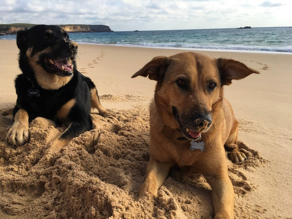 dogs on Portugal beach