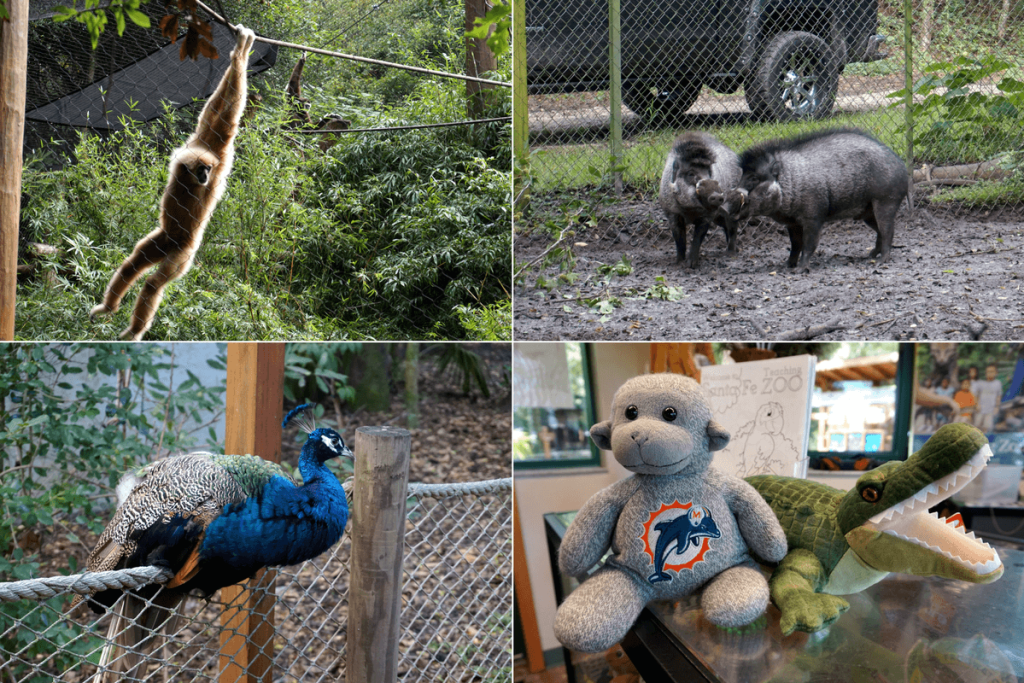 Things to do in Gainesville - visit the Santa Fe College Teaching Zoo