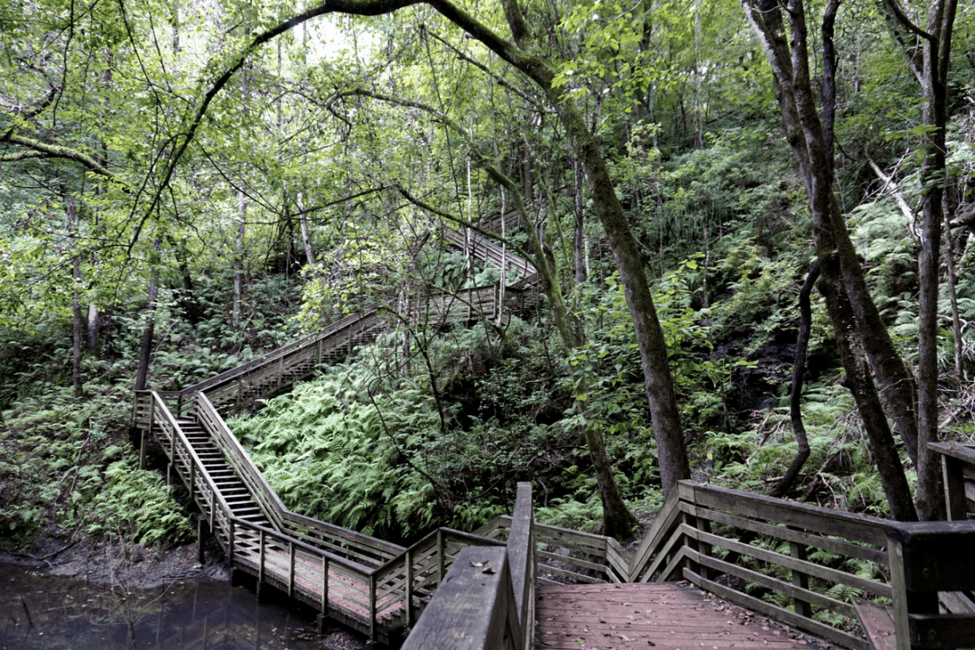 Devil's Millhopper Geological State Park has a lot of stairs
