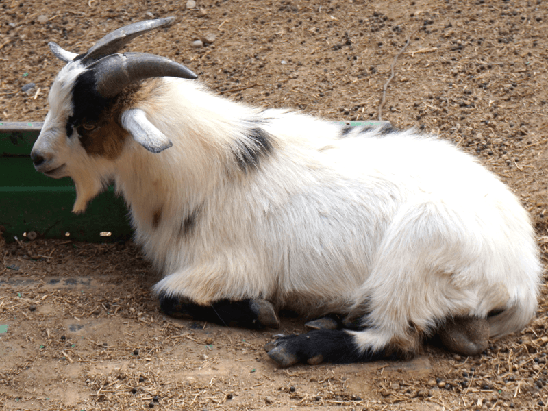 Kids will love the petting zoo at Schnepf Farms