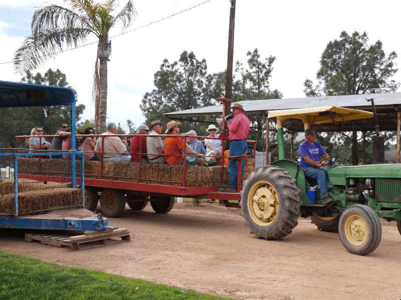 The hayride at Schnepf Farms