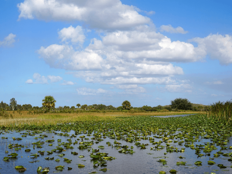 """The Everglades are also know as the """"River of grass"""""""