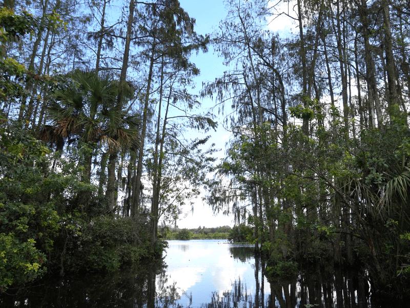 Airboat ride through the Florida Everglades