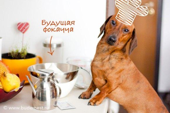 Пёсик-Фердидосик готовит фокаччу