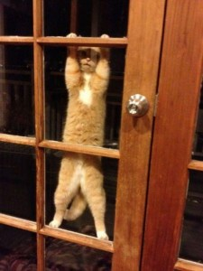 Locked Out Kitty Cat