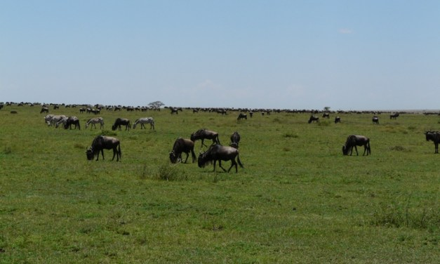 Ngorongoro Serengeti Adventure 3 Days