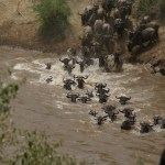 Serengeti Wildebeest Migration 7 Days