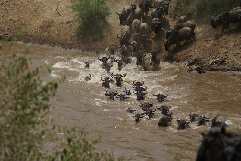 Serengeti Wildebeest Migration 7 Days