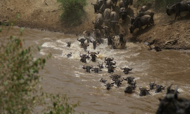 10 Day Budget Safari Wildebeest Migration and Zanzibar