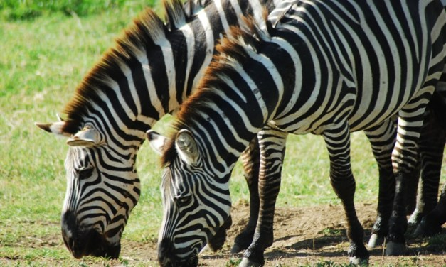 Budget Camping Safari Tanzania 5 Days