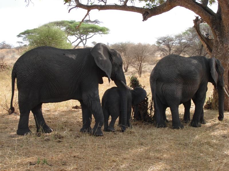 Serengeti-Ngorongoro 4 Day Safari