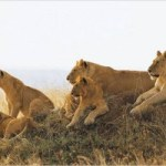 Ngorongoro 3 Day Safari