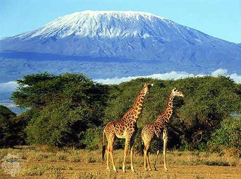 Kilimanjaro National Park-KINAPA