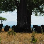 One day Safari to Tarangire National Park