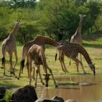 12 Day Safari, Manyara. Serengeti, Ngorongoro and Zanzibar
