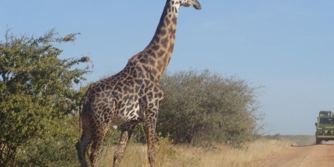 5 Day tour to Northern Tanzania, Serengeti and Ngorongoro