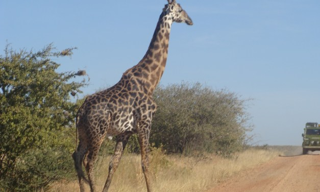 5 Day tour to Northern Tanzania, Serengeti and Ngorongoro
