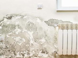 Grzyb i pleśń na ścianie