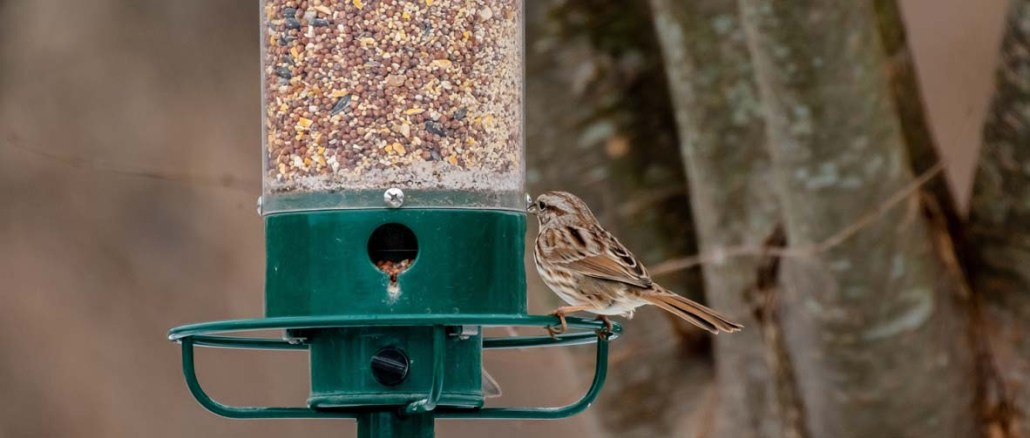 Karmniki dla ptakow w ogrodzie