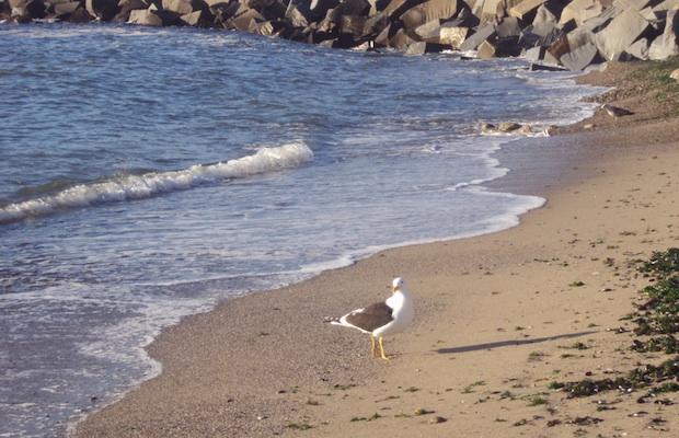 praia uruguai punta del este