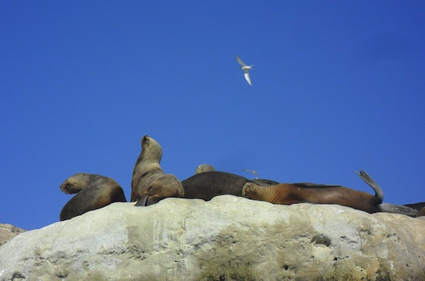 focas puerto madryn