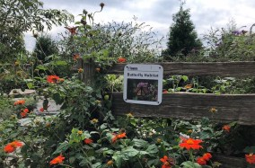 Parque com borboletas ao lado da praia de Sunnyside