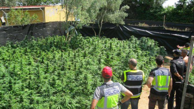 Juez acepta 22 kilos de marihuana como consumo propio