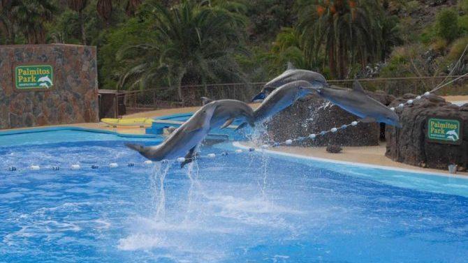 El TSJC declara ilegal el delfinario Palmitos Park de Gran Canaria