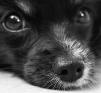 INTERcids nace para proteger legalmente a los animales
