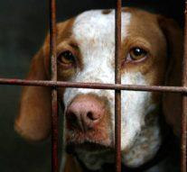 ICA Oviedo dará un curso de formación en Derecho Animal