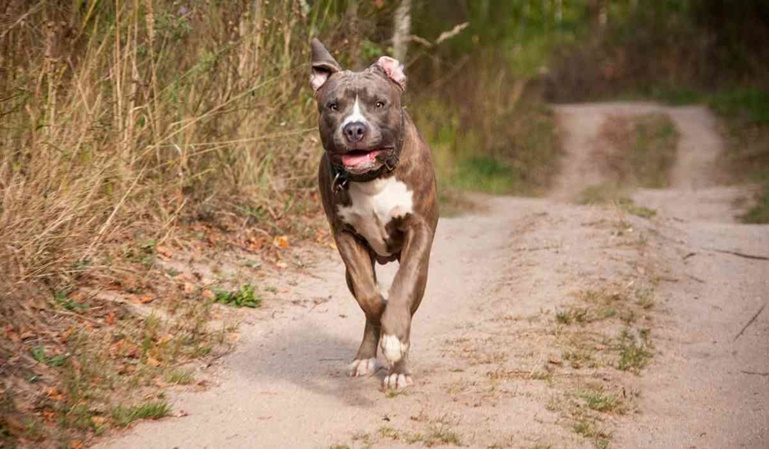 Una perra, testigo en el juicio de su propio maltrato