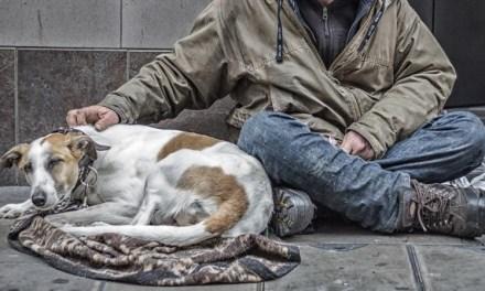 ¿Es maltrato animal utilizar perros para mendigar?