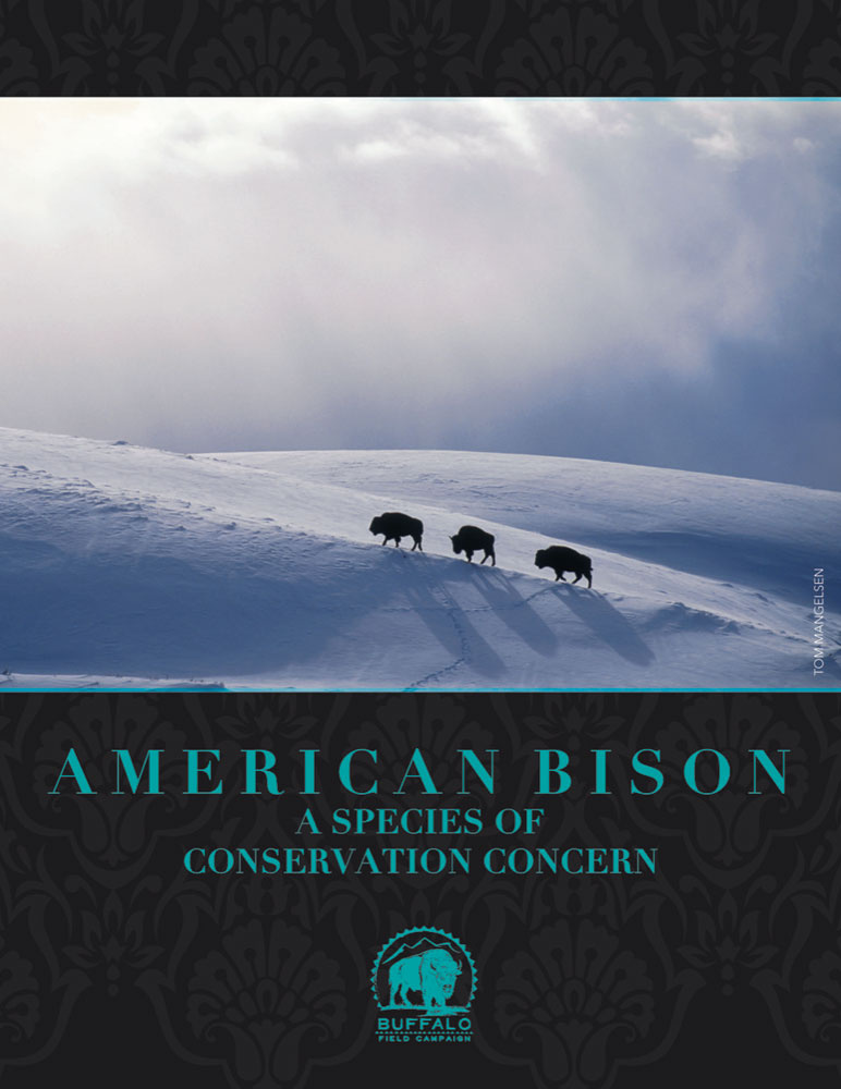 COVER American Bison A Species of Conservation Concern