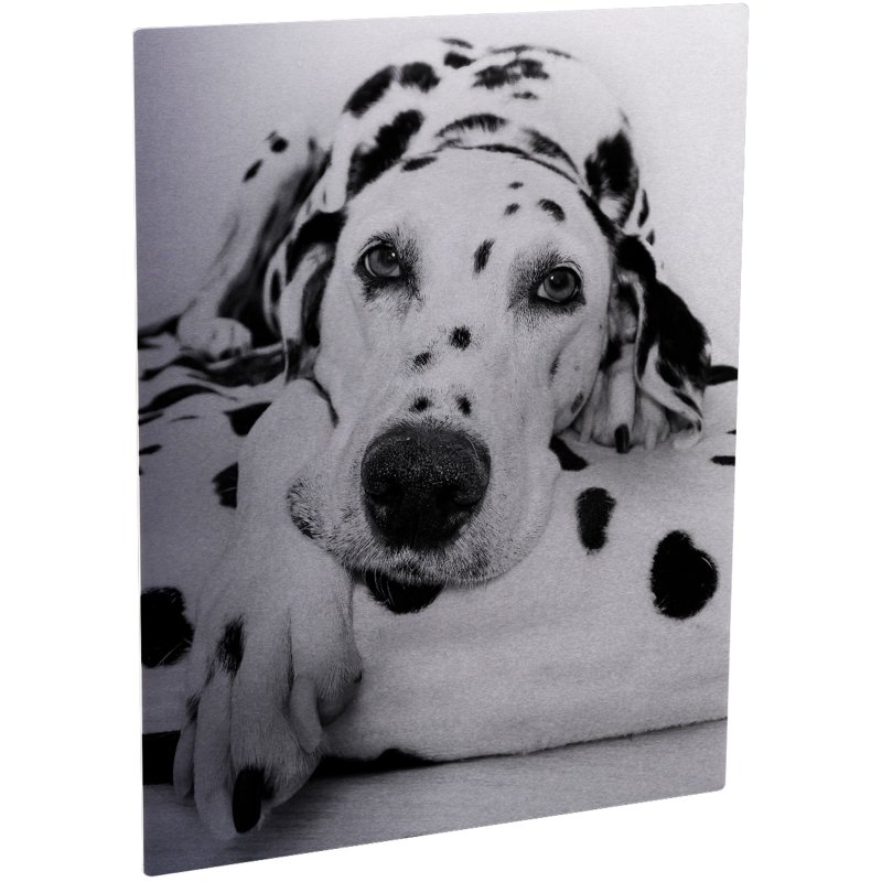 ChromaLuxe Matte Clear/Silver Metal Photo Panel