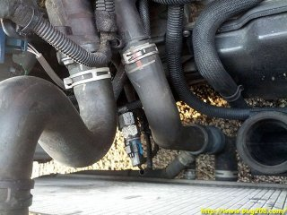 The thermostat housing (the left rubber hose)