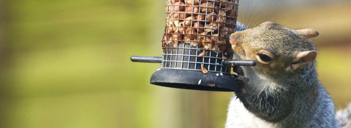 main_squirrel-eating-from-birdfeeder-banner
